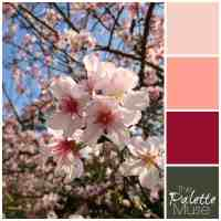 Spring Blossoms Palette