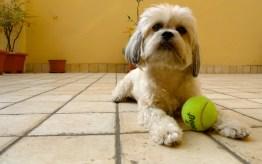 Puppy Love 4 | ©Tom Palladio Images