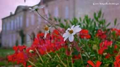 Saint-Emilion, FR scenic   ©Tom Palladio Images