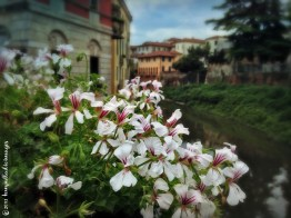 A River, a Bridge and Some Flowers | ©Tom Palladio Images