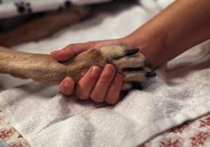 House Halts Taxpayer-Funded VA Dog Experiments