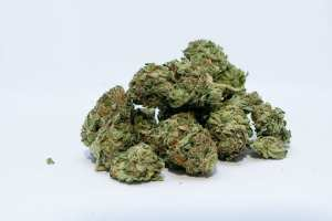 STUDY! 75% of WEED from Madrid contains human feces