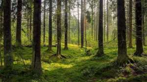 """Buskirk: """"Protecting our natural environment"""" is a conservative issue"""