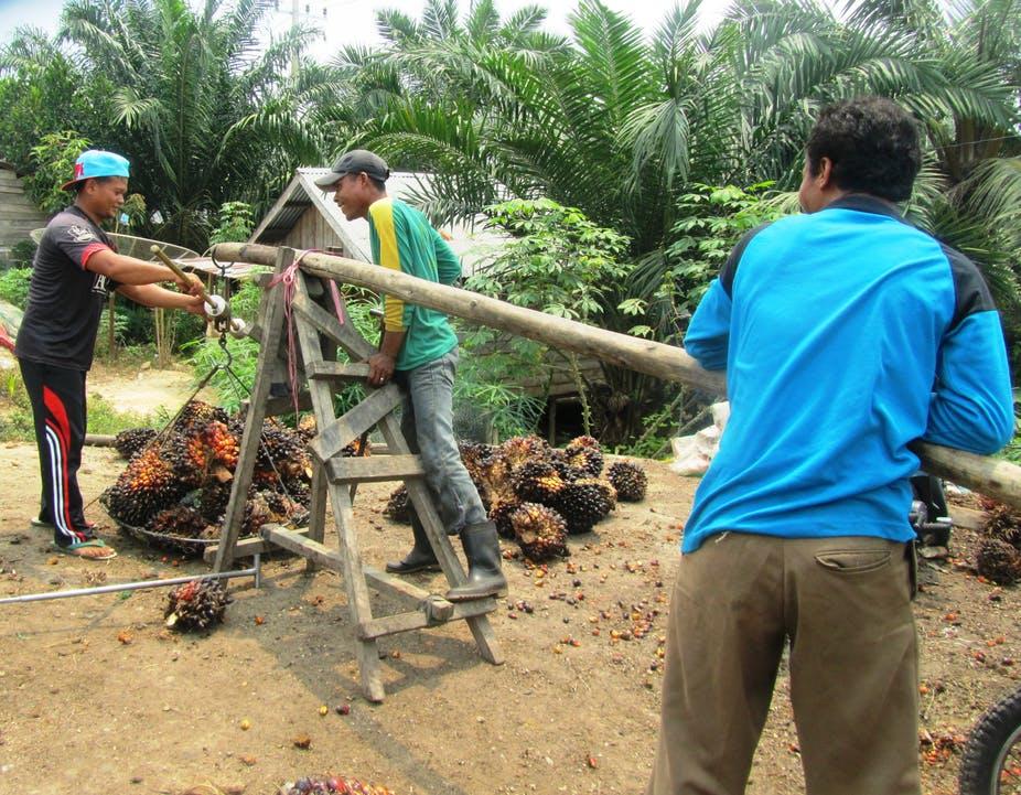 smallholder palm