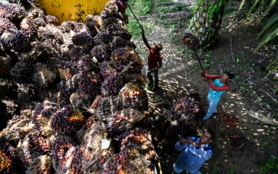 Public Consultation on RSPO Shared Responsibility Task Force to Close Soon