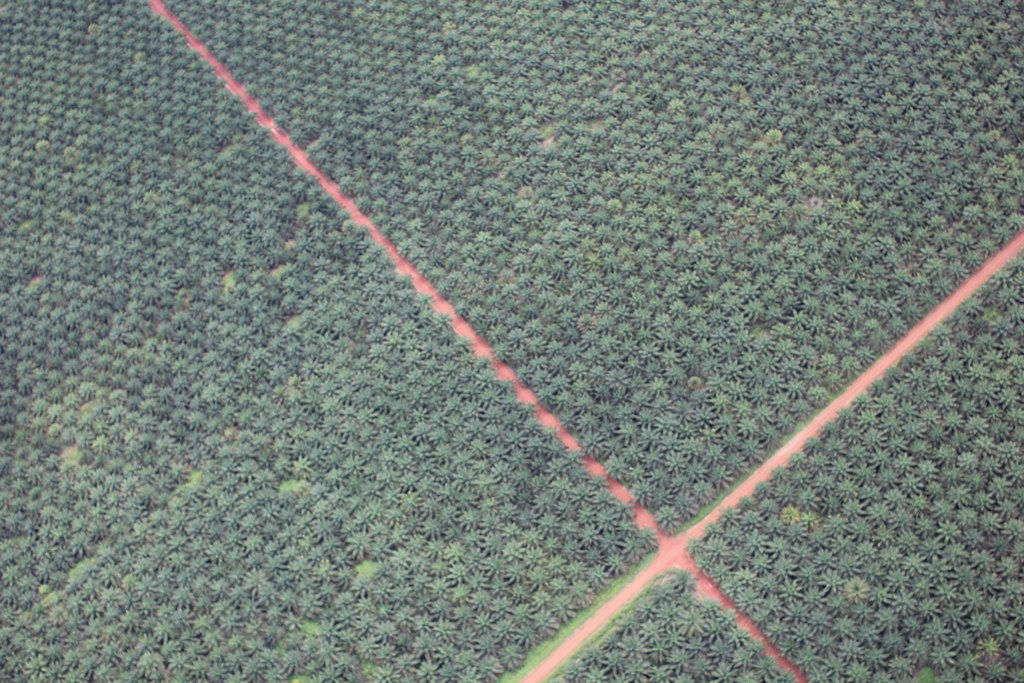 Illustration on palm oil plantation sector
