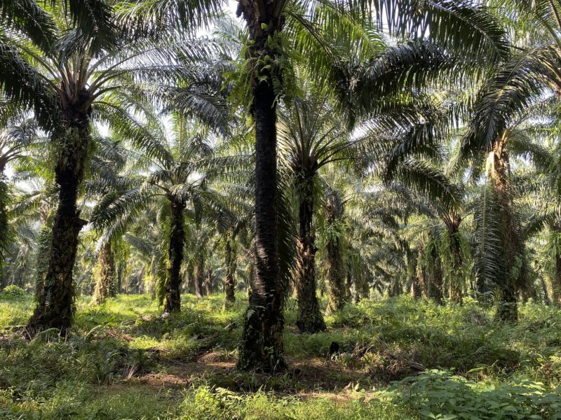 palm oil worker impact from omnibus law