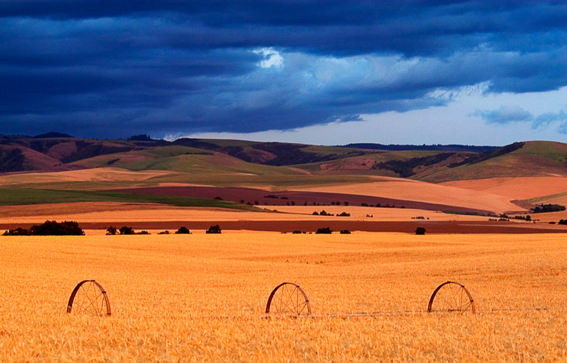 Wheels in the Wheat by Gary Hamburgh - All Rights Reserved