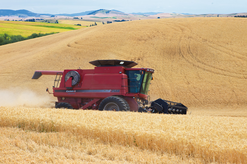 Case IH Combine 3 by Gary Hamburgh - All Rights Reserved