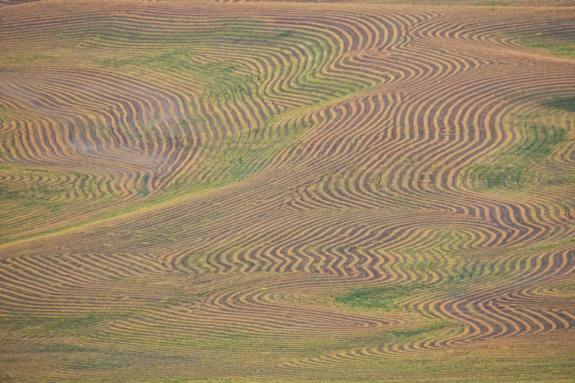 Patterns of Rows by Gary Hamburgh - All Rights Reserved