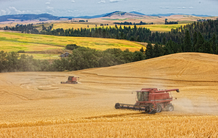 Combines at Harvest - Copyright Gary Hamburgh - All Rights Reserved