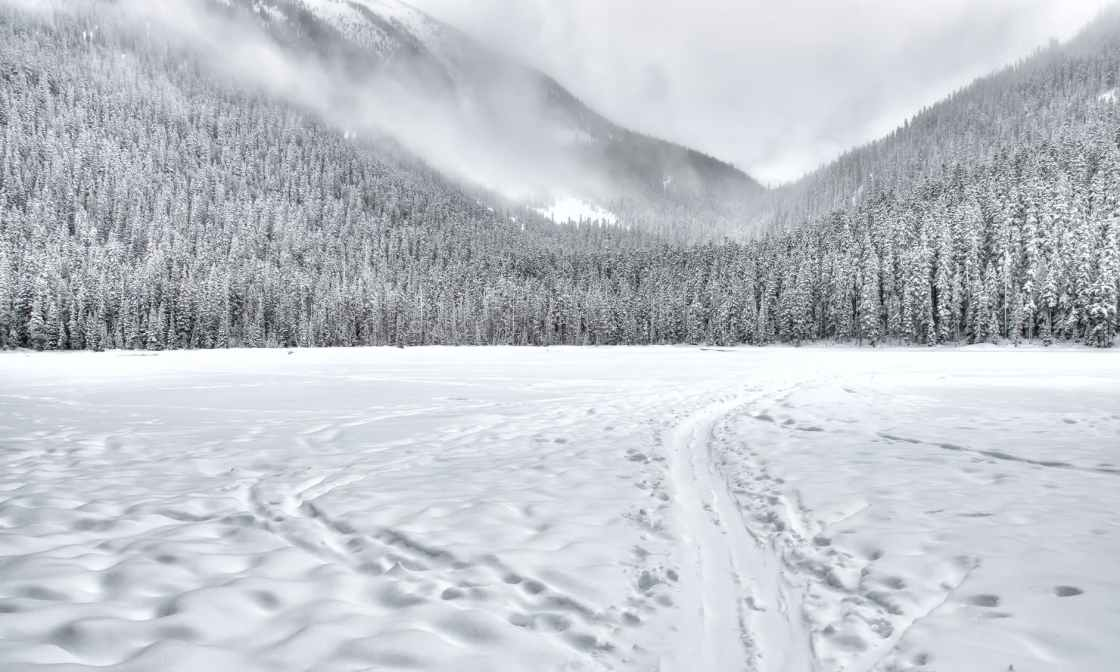snow covered forest field