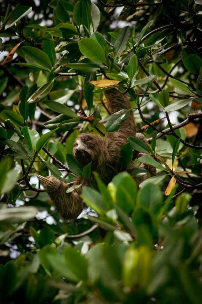 food wood nature bird