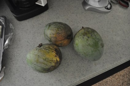 The mango harvest continues