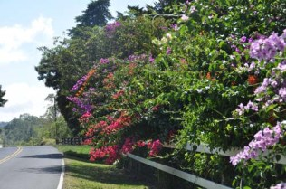 More beautiful flowers along the road