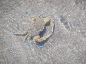 There were a lot of crabs in the river.