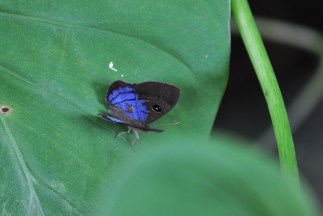 This butterfly is very small.