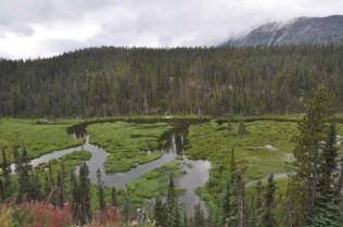 Beaver dams - one is visible to the right of the center of the photo. One time they got so industrious they flooded the area including the train tracks, and the train guys had to go dismantle the problem dam.
