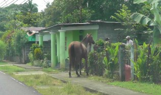A horse in front of someone's house.