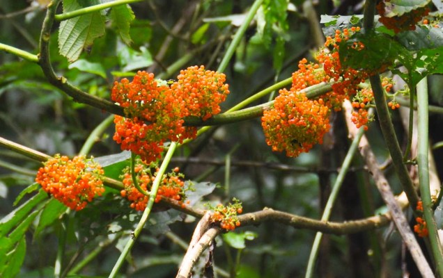 I saw these tiny orange berries in the forest catching a bit of sunlight. This bit of bright color in the green forest is a splash of joy.