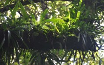 Every possible space has things growing on it, like these ferns and orchids growing on tree branches.