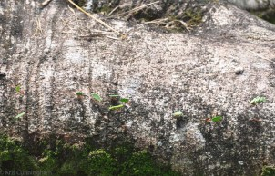 Yes, there are leaf cutter ants here, and they are very busy.