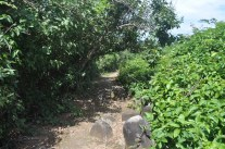 The path across the island.