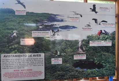 Here's one display about all the birds who can be found here.