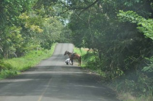 This man was stopped in the middle of the road to check on his horse's foot.