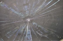 I found this spider web shimmering in the sun one morning.