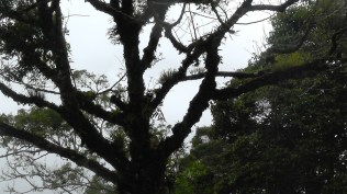 As usual for Panama, trees tend to be covered with other plants.