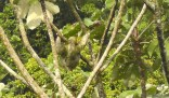 And last but certainly not least, this tree sloth was in a tree not far from the main house on the first day.