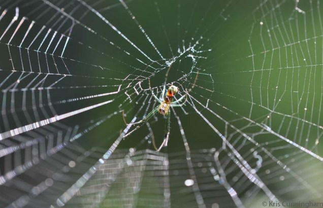 While we are on the subject of spiders, this pretty one spun a web in the potted plants.