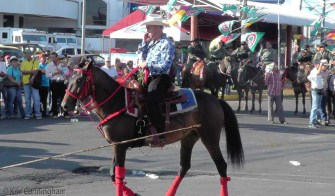 Another nice looking horse. It was not unusual to see riders talking on cell phones.