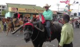 A water buffalo! (looking hot and less than thrilled with this whole parade idea)