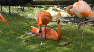 The first things we saw were these beautiful flamingos.