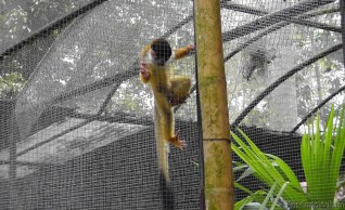 There were a number of cute monkeys, but they were hard to photograph through their double layers of cages.