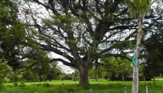 Another amazing tree.
