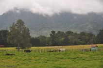 The green pasture, the cows, and the mountains made a very picturesque sight.