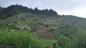 More farmland.