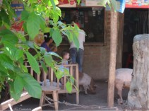 We passed this funny scene of a little shop, a baby, and a couple pigs.