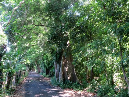 The beautiful pathway to Ojo de Agua