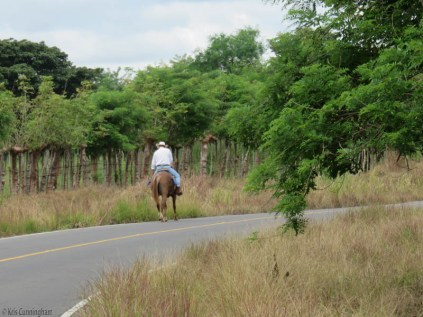 I passed this guy riding his horse. They were just walking along, while I was starting to grind my way uphill. It shows how strong a horse is to not only go up, but do it with a man on his back.