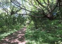 The paths go through beautiful jungles