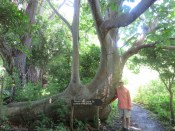 Check out this tree! It says don't write on the bark, but many obviously didn't heed it.