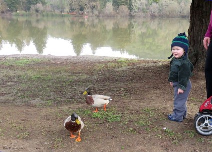 Ducks!