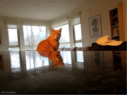 i am the cat!