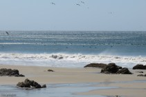 Look how many pelicans are in the water, not counting a lot more that are in the air.