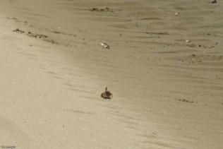 A little crab runs down the sand.