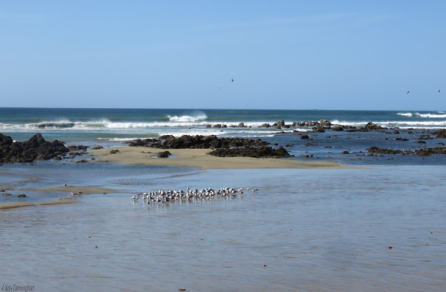 More seagulls, blue sky, and blue sand
